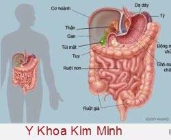 Vai trò của Kali đối với sức khỏe cơ thể