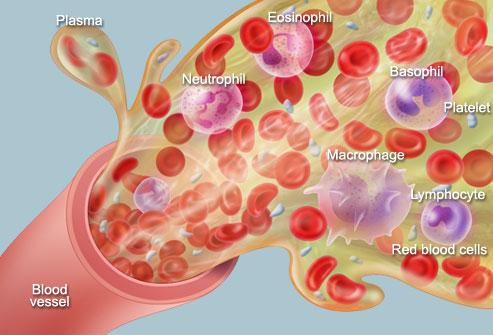Cách vận chuyển máu nuôi cơ thể