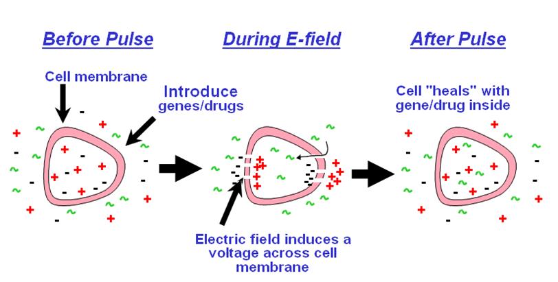 Công nghệ sử dụng máy điện di đẩy dưỡng chất