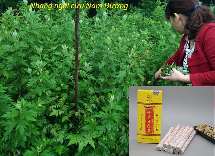Nhang ngai cuu Nam Duong 1.8x20cm bai tai Tp Ho Chi Minh - Y Khoa Kim Minh