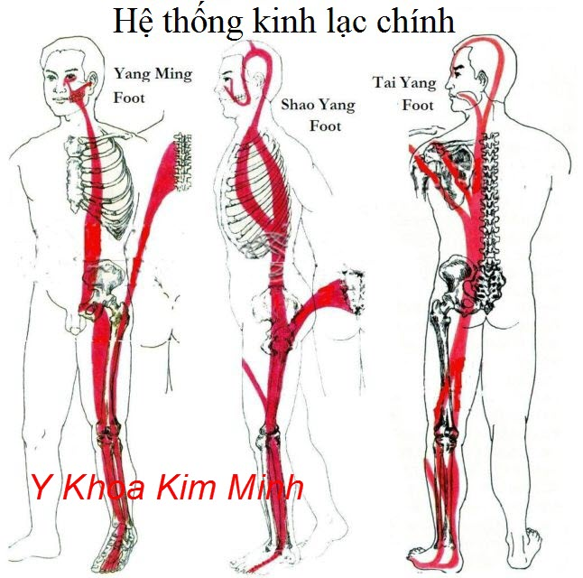 Sơ đồ kinh mạch chính của con người liên quan đến huyệt đạo bàn chân - Y Khoa Kim Minh